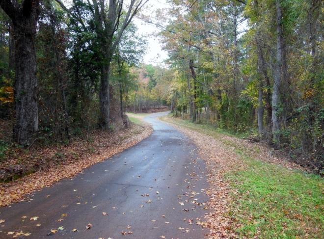 fall road (1024x757)
